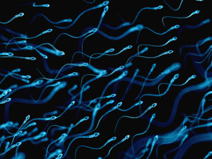 male infertility1